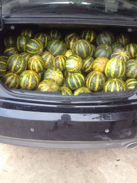 Trong cốp chiếc xe sedan 4 chỗ chứa đầy dưa bở