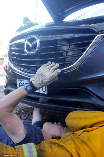 Lực lượng cứu hỏa đến tháo đầu xe Mazda CX-9 để giải cứu chú vẹt.