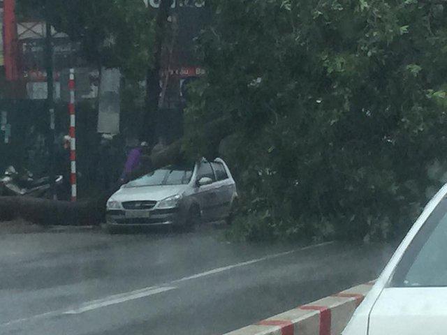 Cây lớn đổ vào trúng ô tô của người đi đường. Hiện chưa rõ có ai thương vong hay không.