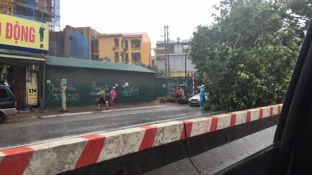 Cây xanh đổ trúng xe taxi trên đường Phạm Văn Đồng, chiều về trung tâm thủ đô.
