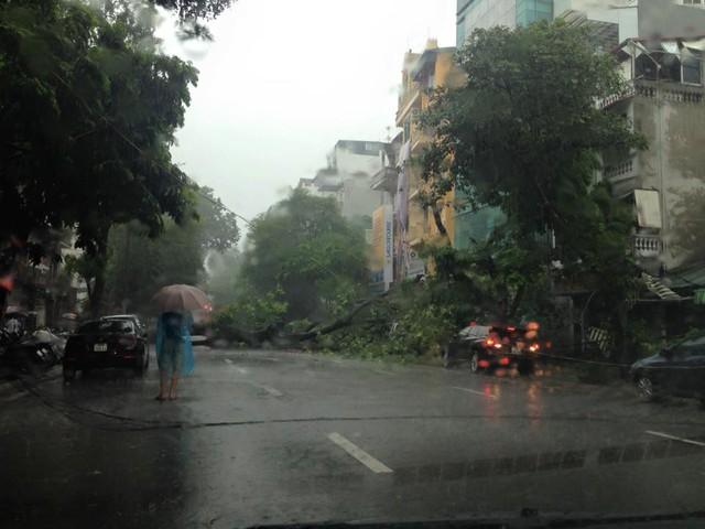 Cây đổ tại đoạn Phan Chu Trinh - Lò Đúc.