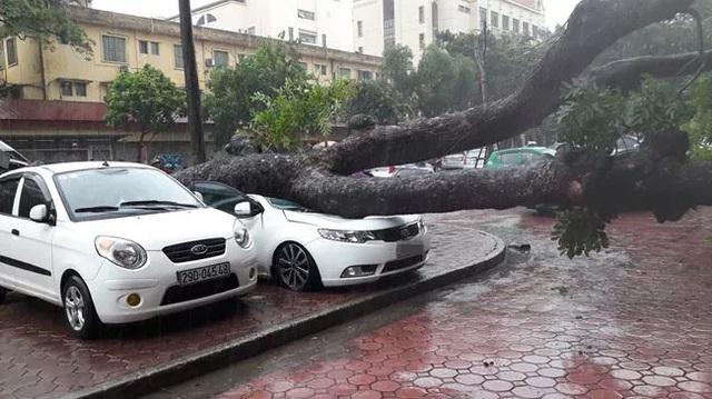 Cây đổ trúng Kia Cerato trên đường Hai Bà Trưng. Ảnh: Otofun