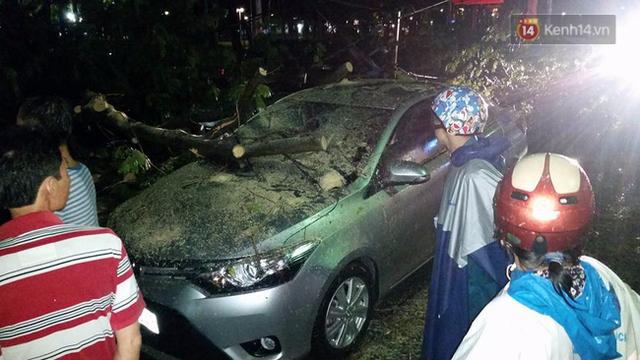 Trong khi đó tại Công viên 23/9, nhiều cây xanh ngã đổ đè vào ô tô ở đây.