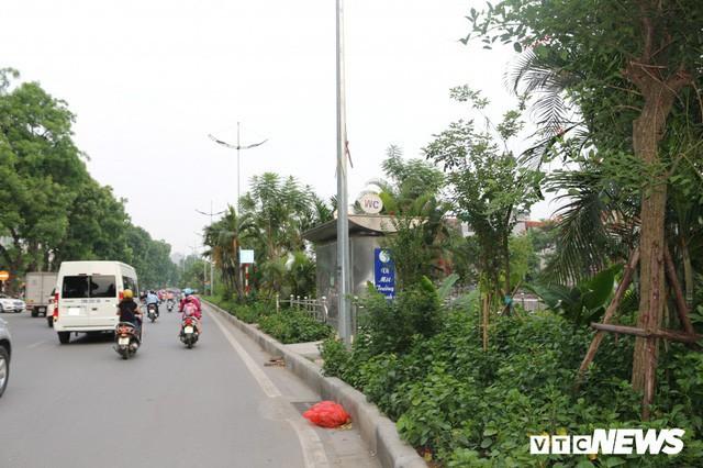 Ảnh: Đường Láng thay đổi bất ngờ, dân Thủ đô cứ ngỡ đang lạc vào đường phố Singapore - Ảnh 13.