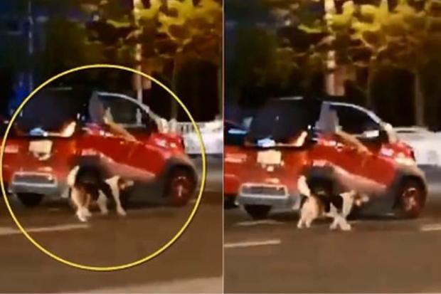 Chỉ vì ô tô hết chỗ, nữ tài xế kéo chú chó chạy theo xe suốt quãng đường dài khiến MXH phẫn nộ - Ảnh 2.