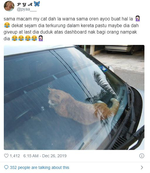 Bị nhốt trong ô tô nhà hàng xóm, chú mèo nhanh trí bật luôn đèn cảnh báo nguy hiểm để gọi sen cứu giúp - Ảnh 3.