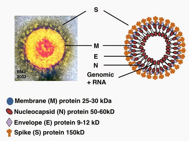 Cồn diệt virus corona như thế nào: Cách chọn nước rửa tay khô an toàn và hiệu quả nhất trong dịch Covid-19 - Ảnh 1.