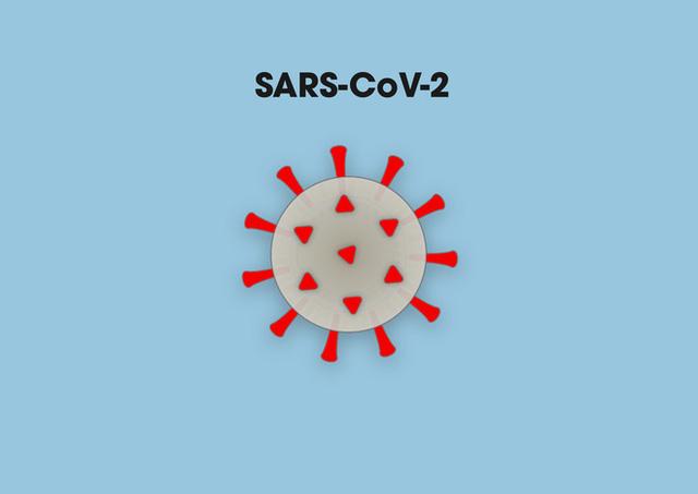 [Infographic] Covid-19 lây nhiễm tế bào phổi như thế nào? Tại sao nó lại nguy hiểm vậy? - Ảnh 1.