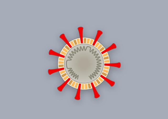 [Infographic] Covid-19 lây nhiễm tế bào phổi như thế nào? Tại sao nó lại nguy hiểm vậy? - Ảnh 10.