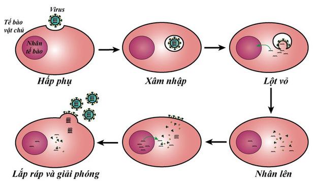 TS Nguyễn Quốc Thục Phương: Nắng nóng mùa hè có giết được virus gây bệnh COVID-19 không? - Ảnh 1.