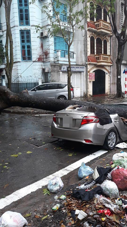 Chiếc xe ô tô bị cây đổ đè bẹp, biến dạng trong cơn mưa lớn ở Hà Nội - Ảnh 4.