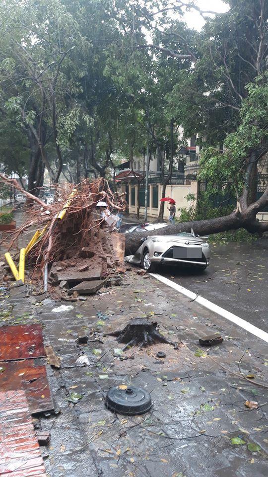 Chiếc xe ô tô bị cây đổ đè bẹp, biến dạng trong cơn mưa lớn ở Hà Nội - Ảnh 1.