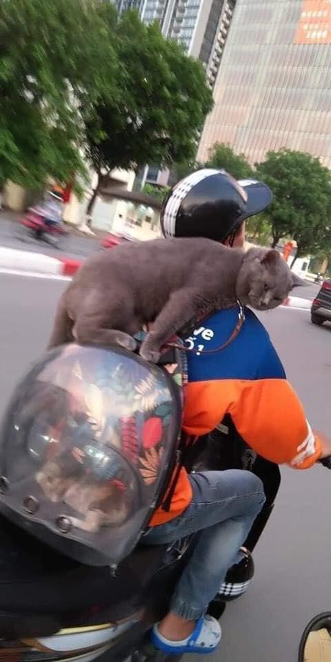 Shipper chở mèo trên phố, biểu cảm của con vật ngồi trên ba lô khiến người đi đường bật cười - Ảnh 1.