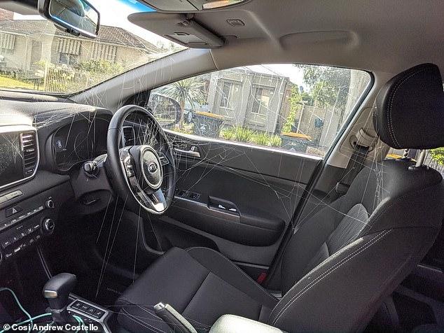Giết nhện sát thủ trong ô tô, 3 ngày sau gặp cảnh kinh sợ - Ảnh 2.