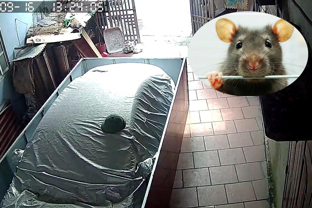 Chủ xe chống chuột cẩn thận như 'gói quà', CĐM thi nhau đặt gạch: 'Lúc nào bác bán xe thì ới em'
