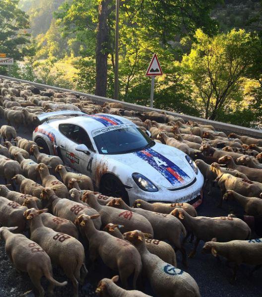 Hầu hết số siêu xe tham gia hành trình đều được dán decal của chương trình. Trong số hầu hết số cừu đều được đánh ký hiệu nhận diện.