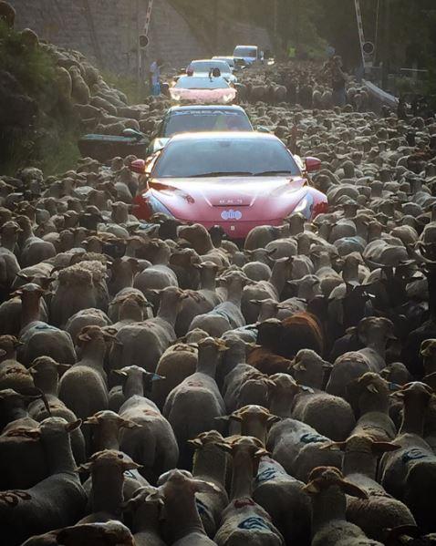 Đàn cừu bao phủ và tràn ra khắp đường, chắn lối đi của đoàn siêu xe tại Pháp.