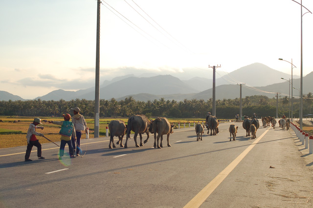 Cảnh sắc thnah bình giữa cung đường ven biển đến Khánh Hòa.