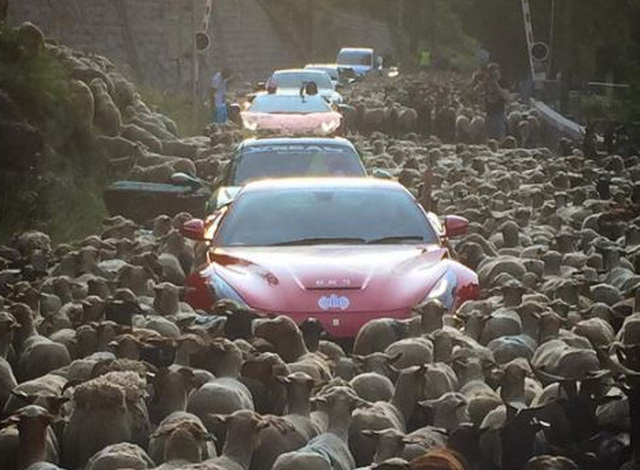 Dàn siêu xe Ferrari, Lamborghini và Porsche mắc kẹt giữa bầy cừu