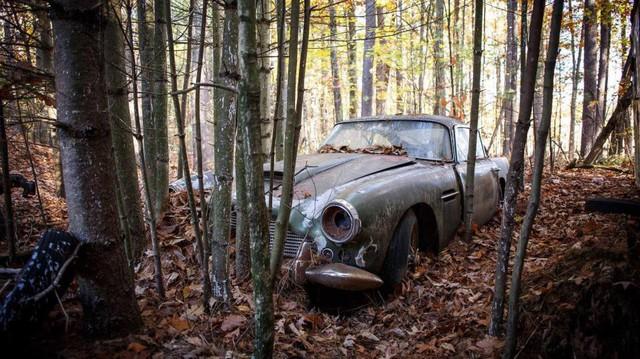 Bị bỏ hoang 40 năm trong rừng, xe Aston Martin độn giá gấp 100 lần so với ban đầu