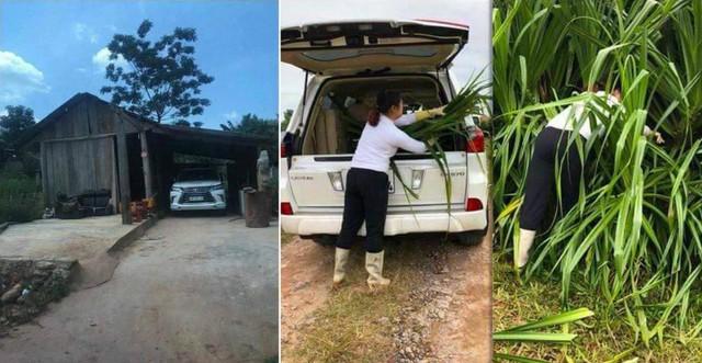 Nông dân Campuchia dùng hẳn xe Lexus để chở rơm rạ - Ảnh 2.