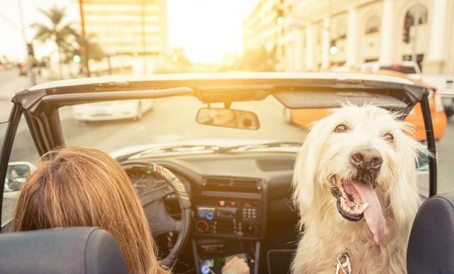 8 việc tuyệt đối không làm khi đặt chân lên xe ô tô: Điều thứ 3 các bà vợ hay mắc nhất! - Ảnh 7.