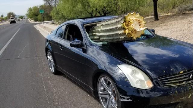 Màn thoát chết thần kỳ của chủ xe đâm thẳng vào xương rồng nặng 1 tấn