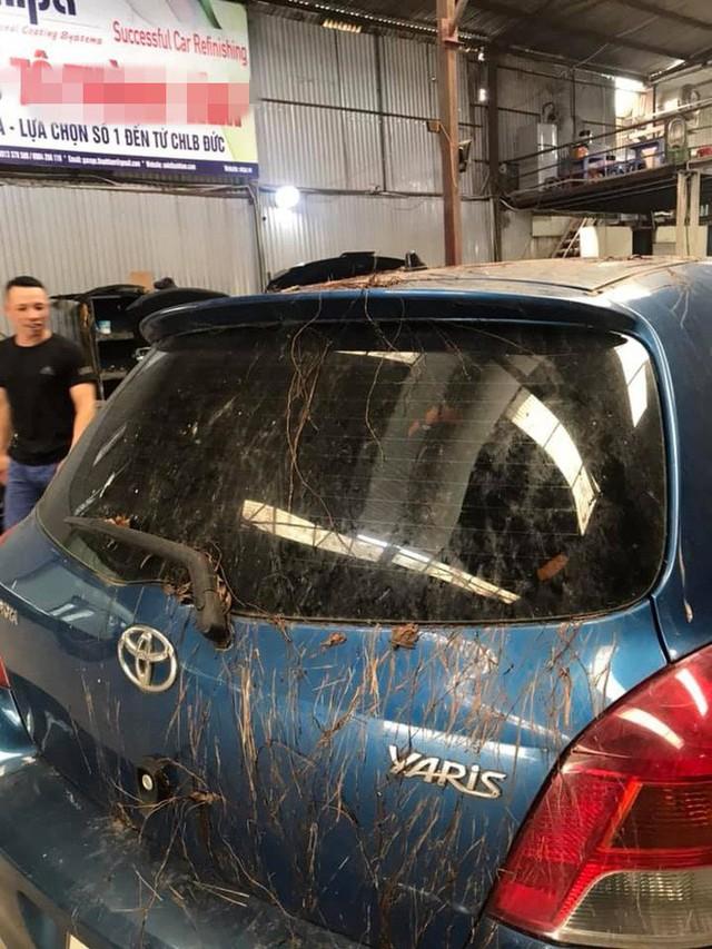 Xôn xao chiếc Toyota Yaris bị rễ cây bám dày đặc - Ảnh 2.