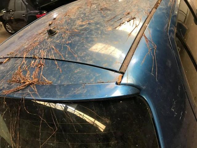 Xôn xao chiếc Toyota Yaris bị rễ cây bám dày đặc - Ảnh 3.