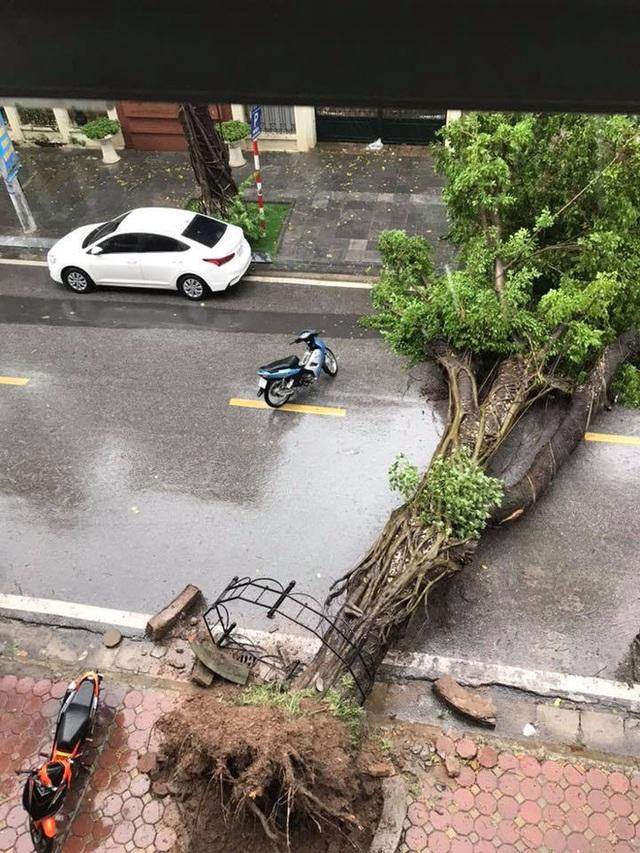 Hà Nội mưa lớn, nhiều ô tô bị cây đè bẹp - Ảnh 1.