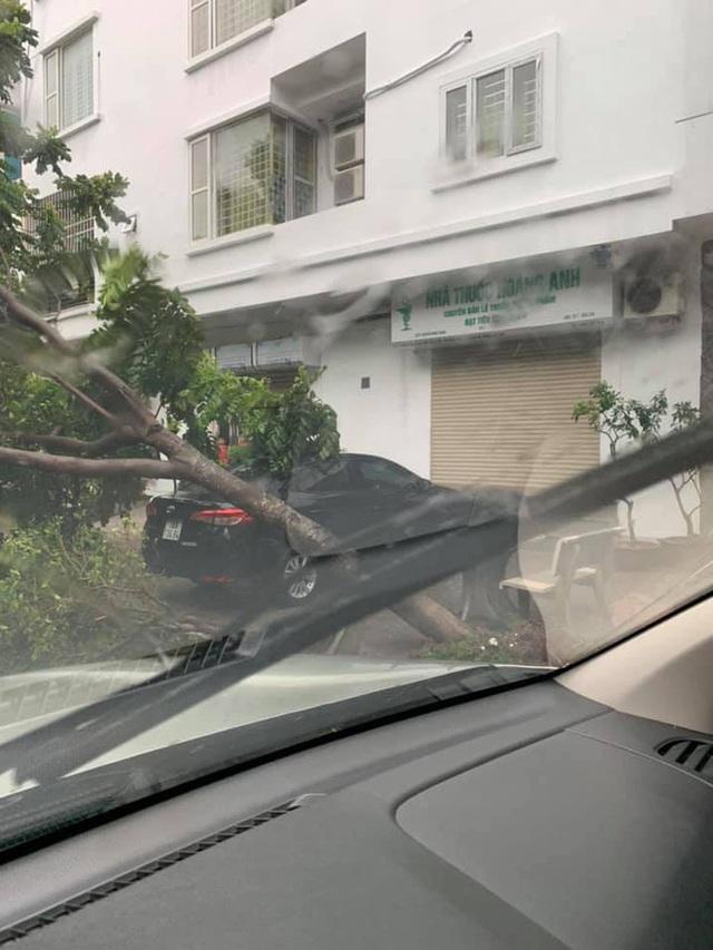 Hà Nội mưa lớn, nhiều ô tô bị cây đè bẹp - Ảnh 2.