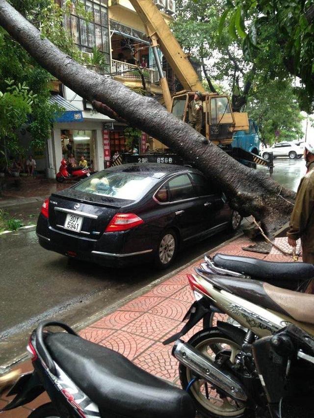 Hà Nội mưa lớn, nhiều ô tô bị cây đè bẹp - Ảnh 5.
