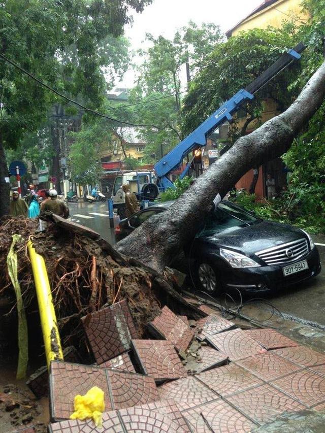 Hà Nội mưa lớn, nhiều ô tô bị cây đè bẹp - Ảnh 6.