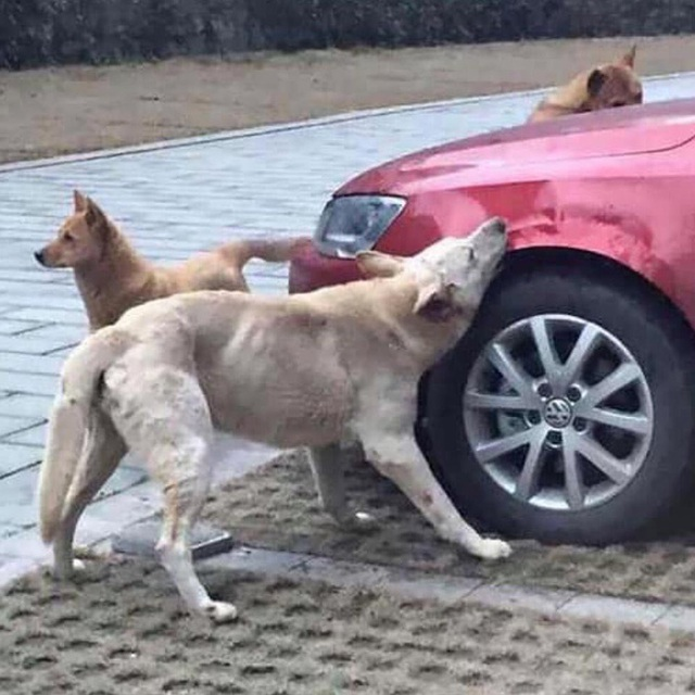 Đá con chó hoang để giữ chỗ đỗ xe, người đàn ông bị trả thù theo cách không ngờ - Ảnh 1.