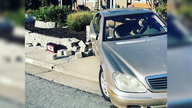 Bị nhốt trong xe, chó cưng lái Mercedes của chủ đâm vào tường - Ảnh 1.