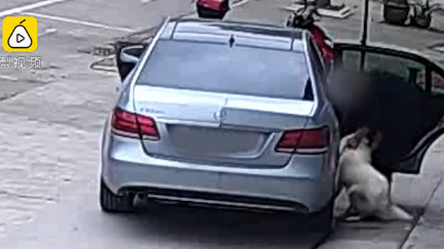 Doanh nhân lái xe sang Mercedes-Benz E-Class đi trộm chó