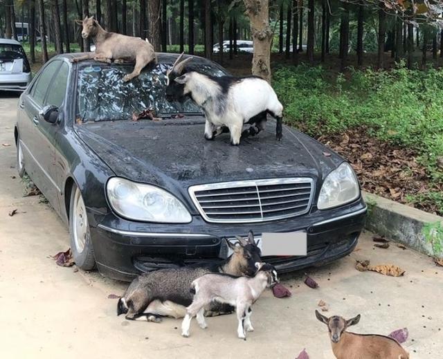 Xót xa Mercedes-Maybach S600 14 tỷ phủ bụi ở Hà Nội - Ảnh 4.