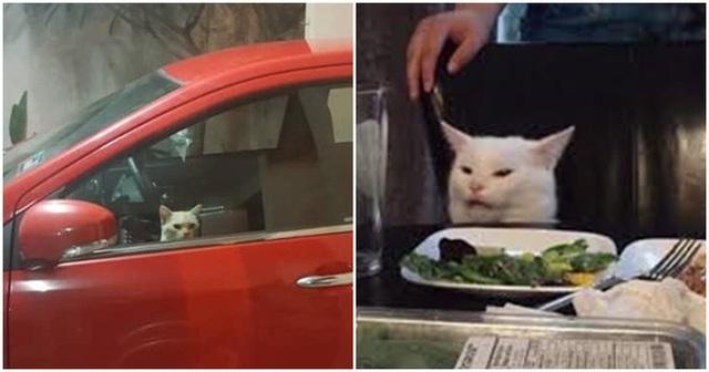 Bị nhốt trong ô tô nhà hàng xóm, chú mèo nhanh trí bật luôn đèn cảnh báo nguy hiểm để gọi sen cứu giúp - Ảnh 5.
