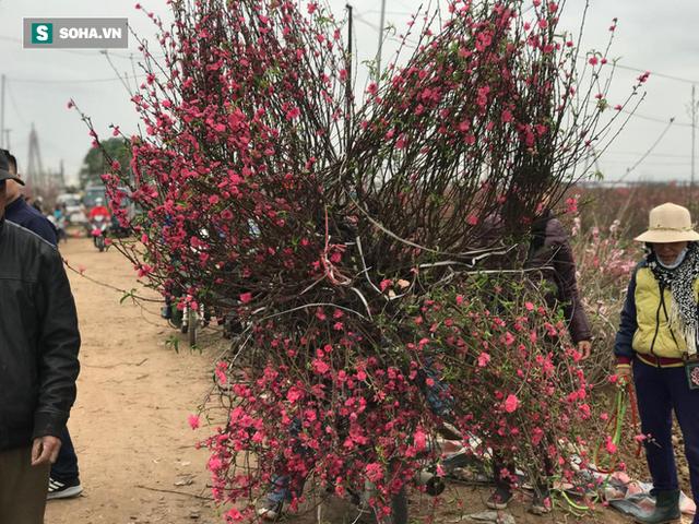 Tài xế nghỉ làm đi chở thuê cây cảnh ngày cận Tết kiếm tiền triệu mỗi ngày - Ảnh 5.