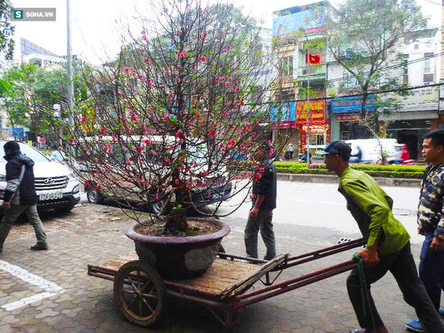 Tài xế nghỉ làm đi chở thuê cây cảnh ngày cận Tết kiếm tiền triệu mỗi ngày - Ảnh 6.