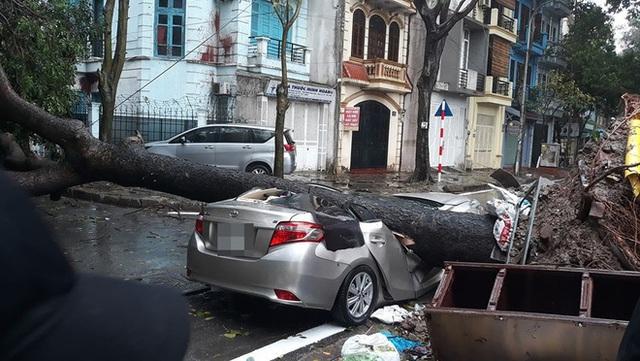 Chiếc xe ô tô bị cây đổ đè bẹp, biến dạng trong cơn mưa lớn ở Hà Nội - Ảnh 2.