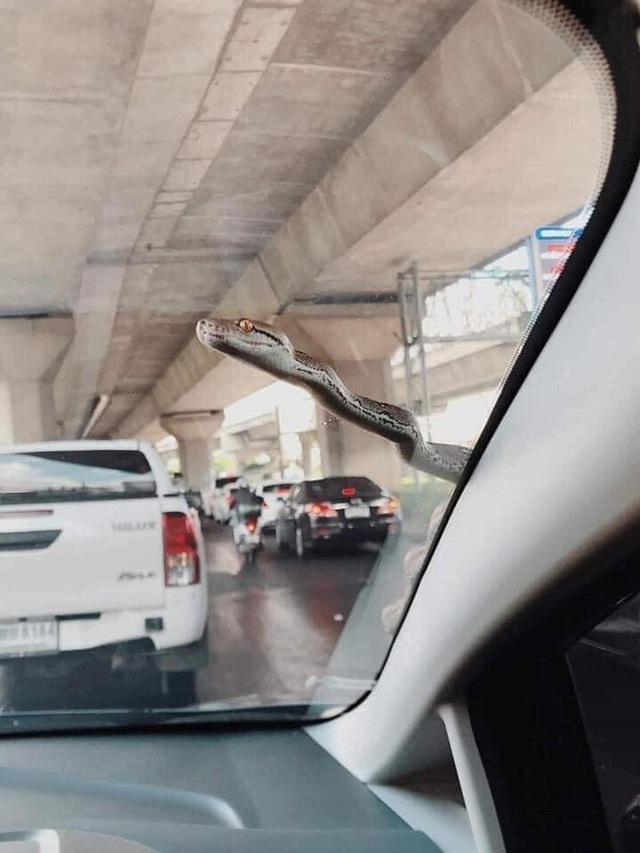 Đang lái ô tô, tài xế xanh mặt khi thấy bé Na ngoe nguẩy nhòm qua kính - Ảnh 1.
