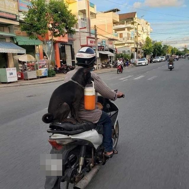 Chú chó hot trên MXH: Sáng mang cặp lồng tối mang đèn đi chơi, ngồi xe máy dạo quanh phố - Ảnh 1.