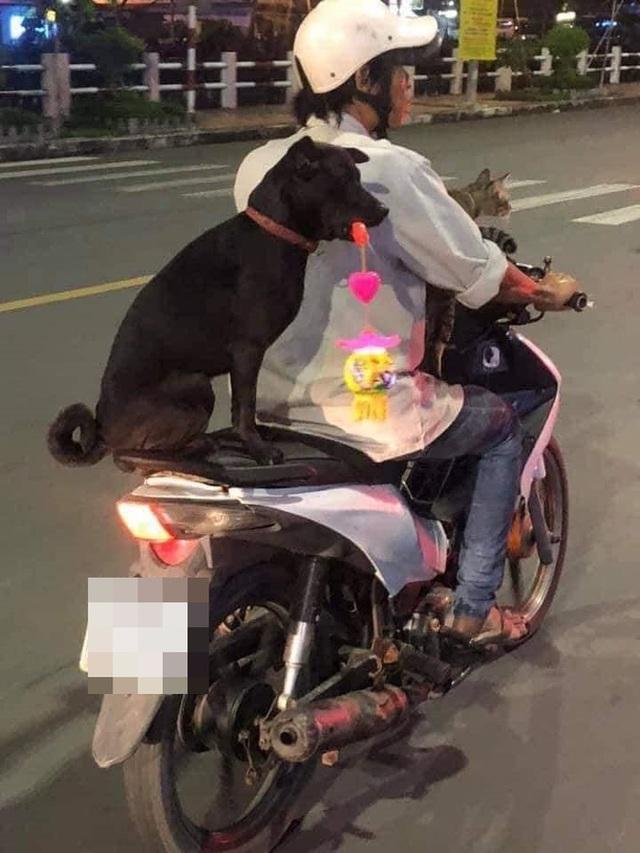 Chú chó hot trên MXH: Sáng mang cặp lồng tối mang đèn đi chơi, ngồi xe máy dạo quanh phố - Ảnh 2.