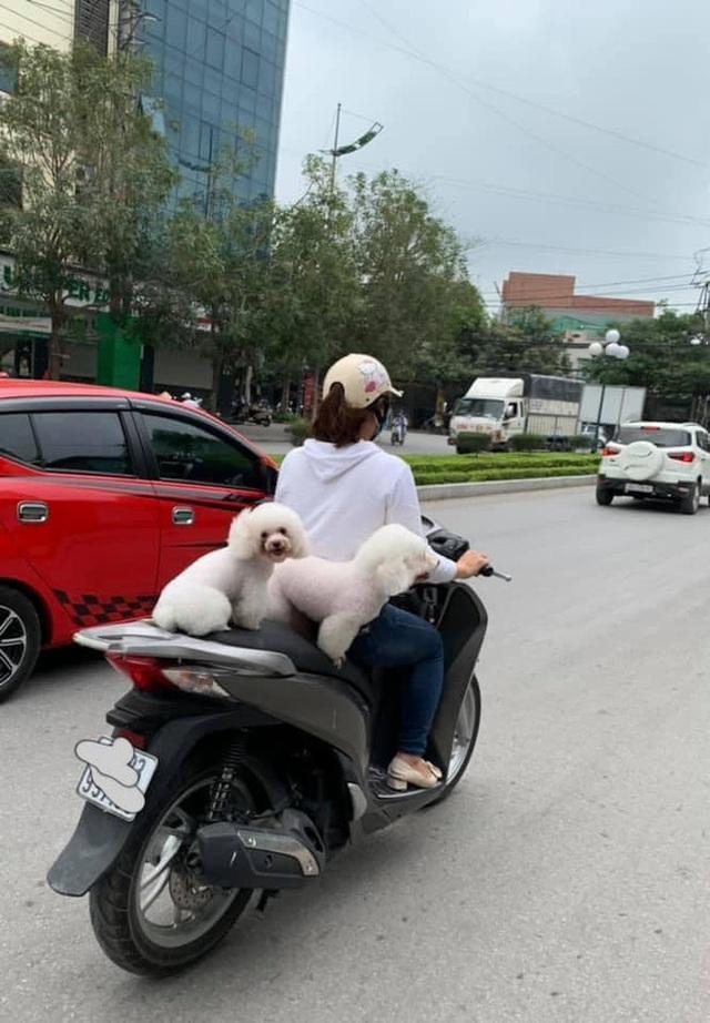 Cô gái lái xe máy khiến cả phố tim đập nhanh, nhất là nhìn vào phần yên sau - Ảnh 1.