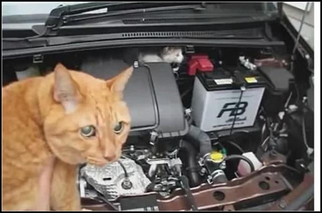 Ô tô bỗng nhiên chết máy, chủ xe vội kiểm tra máy móc rồi không khỏi giật mình, phải nhờ đến mèo nhà hàng xóm sang... giúp một tay - Ảnh 1.