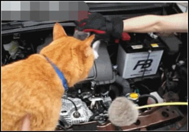 Ô tô bỗng nhiên chết máy, chủ xe vội kiểm tra máy móc rồi không khỏi giật mình, phải nhờ đến mèo nhà hàng xóm sang... giúp một tay - Ảnh 2.