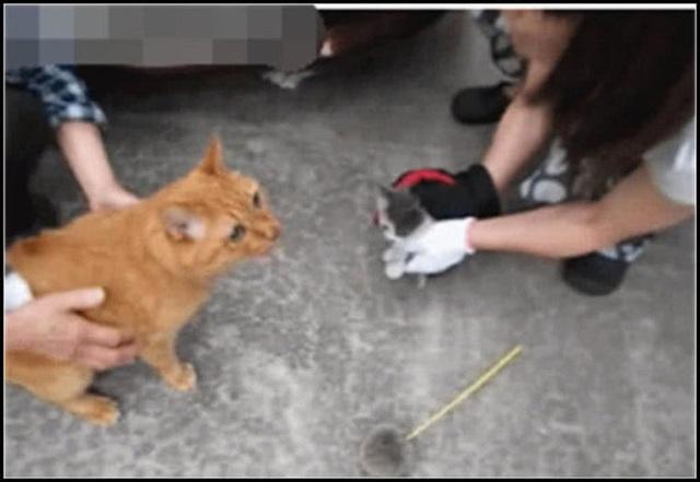 Ô tô bỗng nhiên chết máy, chủ xe vội kiểm tra máy móc rồi không khỏi giật mình, phải nhờ đến mèo nhà hàng xóm sang... giúp một tay - Ảnh 3.