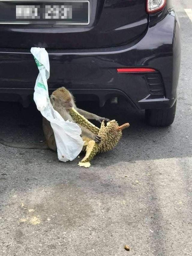 """Treo sầu riêng ngoài ô tô để tránh ám mùi, chủ xe nào ngờ gặp phải cái kết """"cứng họng"""": Bài học nhớ đời từ nay về sau! - Ảnh 3."""