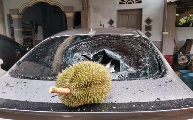 Quả sầu riêng được rao bán giá 'trên trời' sau khi rơi trúng ô tô làm vỡ kính - Ảnh 1.